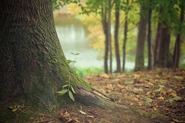 tree-trunk-569275_640