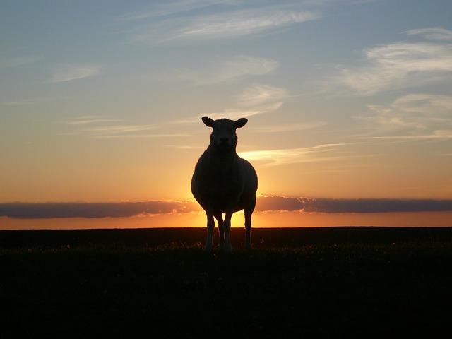 sunset-50494_640-toeic