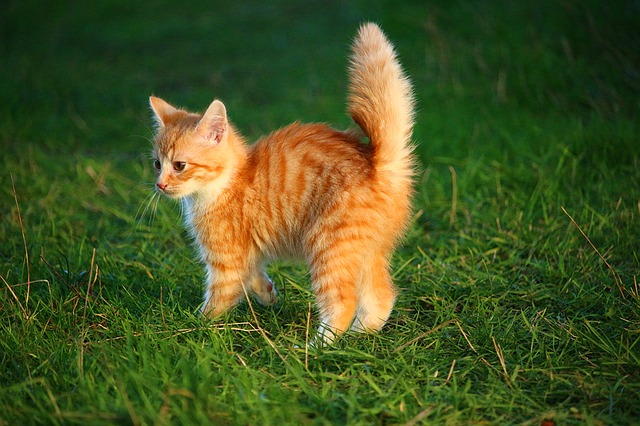 cat-1074657_640