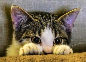 クリックすると鳴く猫